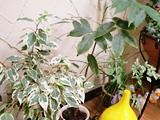 店内植物画像